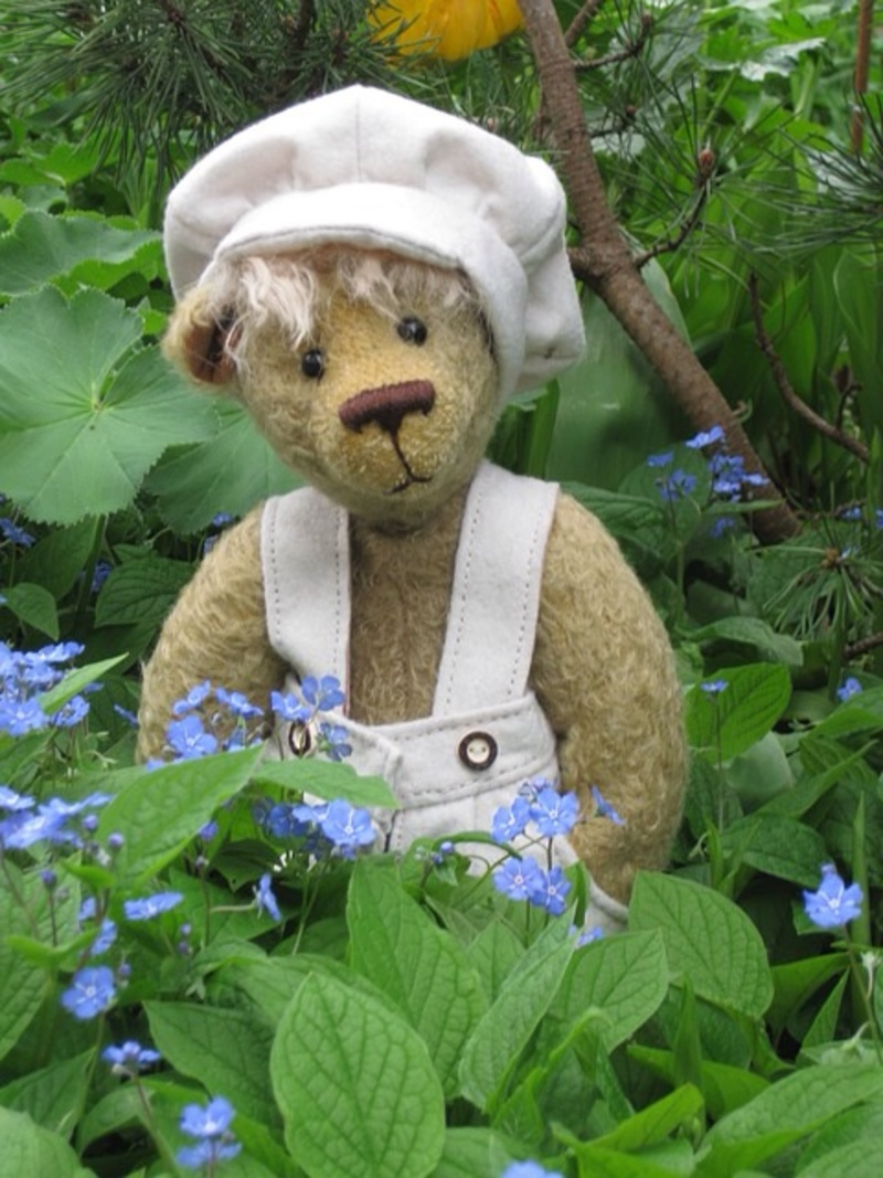 Bear, teddy, teddy bear, toy, soft toy, clothes, outfit, outdoors, hiding  - Take the kids on a bear hunt